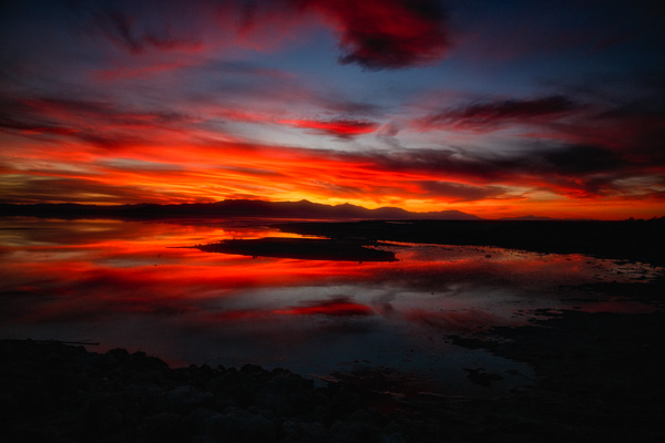 On the shores of the Surreal Salton Sea